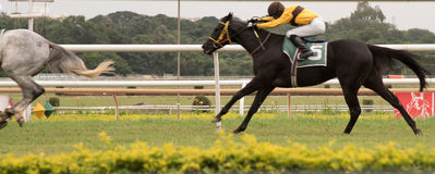 Horse Racing to finish. Horse Racing event in India, Pune stock photo