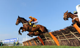 Horse Racing. Tom Scudamore and Thistlecrack (Orange and black) win the 3:30 at Cheltenham races, 17-3-16 royalty free stock photo
