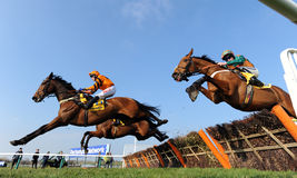 Horse Racing. Tom Scudamore and Thistlecrack (Orange and black) win the 3:30 at Cheltenham races, 17-3-16 royalty free stock photos