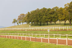 Horse Racing Training Track Royalty Free Stock Images