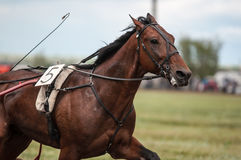 Horse racing. Is a type of testing horses on playfulness (speed), which concludes on the suitability for further breeding (use the breed Royalty Free Stock Photography