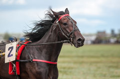 Horse racing. Is a type of testing horses on playfulness (speed), which concludes on the suitability for further breeding (use the breed Stock Image