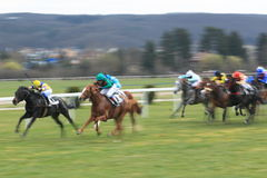 Horse racing - Velka Chuchle prix 2013 Stock Image