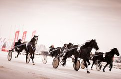 Horse racing in the winter on ice royalty free stock photos