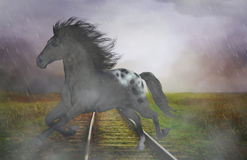 Horse in the Rain. A gorgeous wild horse galloping in the rain on railway rails. A nice horse picture for all horse lovers Stock Photography
