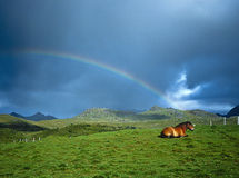 Horse and Rainbow, Lofoten Norway. A horse rests on green fields of a farm with a rainbow and stormy clouds in the background, on the Lofoten Islands, Norway, in Royalty Free Stock Image