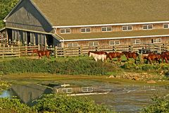 Horse Ranch. Scenic view of a horse ranch, with reflection of the ranch in the pond Stock Image
