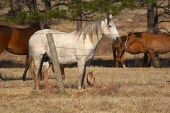 Horse Ranch Royalty Free Stock Photos