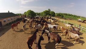 Horse ranch, air view stock video footage