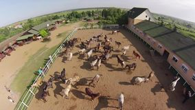 Horse ranch, air view stock video