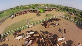 Horse ranch, air view Royalty Free Stock Photography