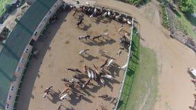 Horse ranch, air view Royalty Free Stock Photo