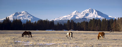 Ranch Animals at the Base of Three Sisters Mountains Oregon Stock Images
