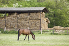 Horse on ranch Stock Image