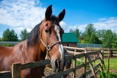 A horse ranch with horses Stock Photography