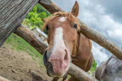 Horse on the ranch Royalty Free Stock Images
