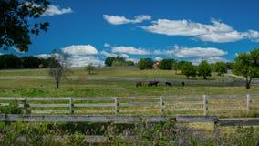 Horse ranch, rural minnesota Royalty Free Stock Image
