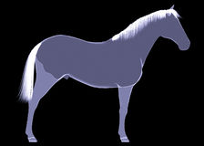 Horse. The X-ray render. On a black background Stock Photo