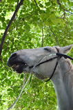 Horse. The horse reaches an average age of 25-30 years, among some breeds pony meet animals surviving to 40 years. The brain is relatively small, and hemispheres Stock Image