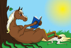 Horse reading book Stock Photos