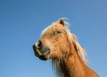 Horse Stock Images