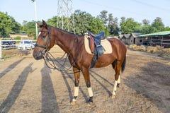 Horse ready for a ride Stock Photos