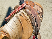 Horse ready for rodeo. Horse is prepared for a rodeo event Royalty Free Stock Image