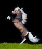 Horse rearing on black Royalty Free Stock Photo