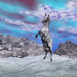 Horse rearing in the mountain - 3D render. Beautiful leopard appy horse rearing on the snow in the mountain Stock Images