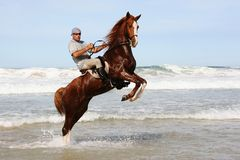 Horse rearing in sea. Rearing brown horse and rider in the water at the beach Royalty Free Stock Photos