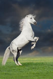 Horse rearing up Stock Photo