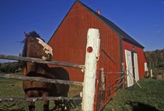 Horse and red barn, Cape Breton, Nova Scotia Royalty Free Stock Photography