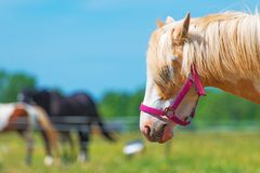 Horse with red bridle. Space for your text stock images