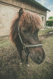 Horse with red hair. At a rural farm royalty free stock image