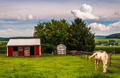 Horse and red stable in a field in Southern York County, Pennsyl Royalty Free Stock Image