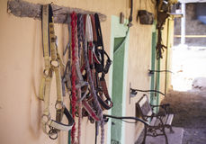 Horse reins. Hanging from a piece of wood Stock Photo