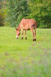 Horse relax in grassland Stock Photo