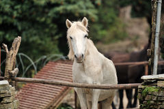 Horse relax Royalty Free Stock Image