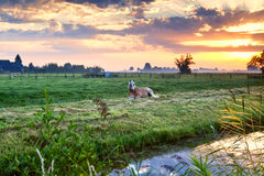 Horse relaxed on pasture at sunrise Royalty Free Stock Image