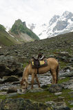 Horse for rent at Sonamarg, Kashmir. India stock photo