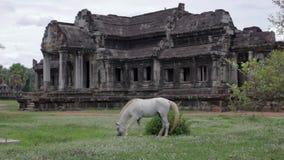 Horse rental in Angkor Wat stock footage