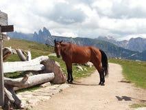 Horse in Resciesa mountains, Italy Royalty Free Stock Photos