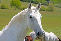Horse on the rest Stock Images