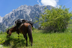 Horse resting during hike in Albanian Alps. During hinke over Valbona pass from Theth to Valbona Stock Image