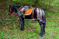 Horse , resting during Juni parade Royalty Free Stock Photography