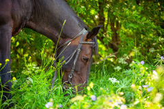 Horse resting after workout Royalty Free Stock Photos