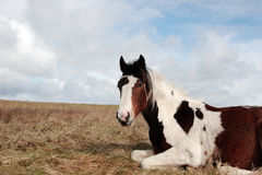 Horse rests Royalty Free Stock Photos
