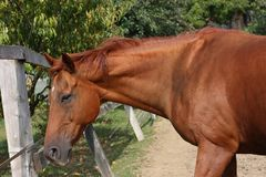 The horse rests happy in the paling on a sunny day. In summer Royalty Free Stock Photos
