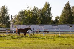 Horse in the paddock on the farm stock photography