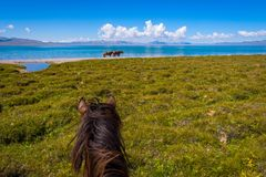 Horse ride, first person view Stock Photos